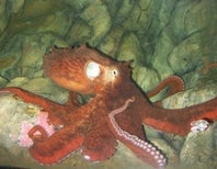 How Did a Giant Octopus Lose the Battle of Seattle?