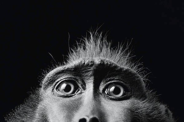 What Monkeys Can Teach Us about Advertising