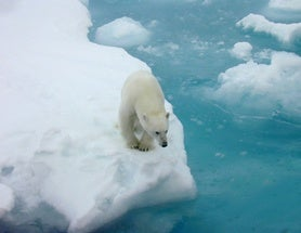 "Polar Bear Conservation Plan Calls Climate Change ""the Primary Threat"" to Their Survival"