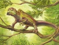 Triassic Oddball Has a Familiar Face