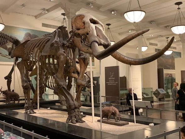 Busted Mastodon Is Ice Age Roadkill