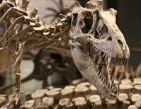 Most Dinosaur Species are Still Undiscovered