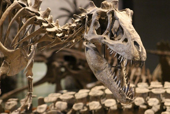 Most Dinosaur Species are Still Undiscovered