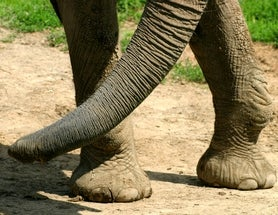 The Amazing Biodiversity within an Elephant's Footprint