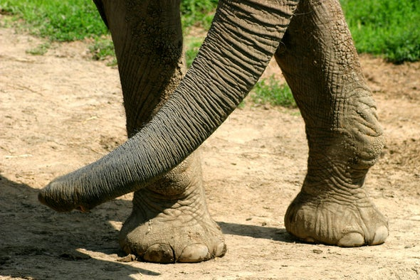 The Amazing Biodiversity within an Elephant's Footprint