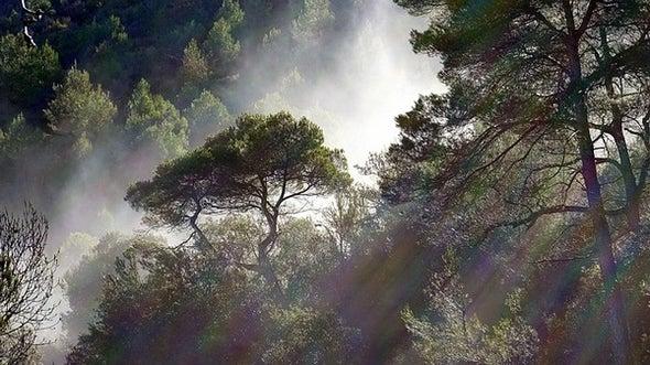 10 Ways to Listen to Trees