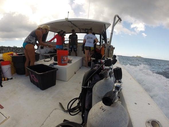 Bringing Back the Nassau Grouper
