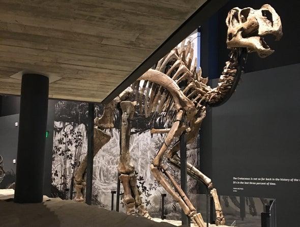 Paleontologists Unveil Shovel-Billed Dinosaur