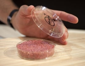 Growing the Future of Meat