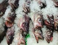 Do Fish Suffer?