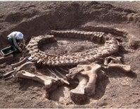 The Secret of the Dinosaur Death Pose