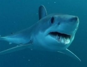 Human Antibodies Given Sharklike Armor to Fight Disease