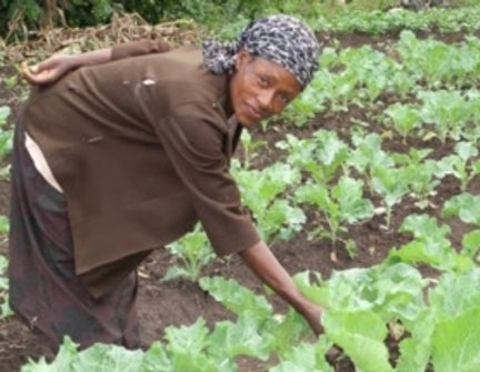 What Is The Primary Link Between Food Security And Health