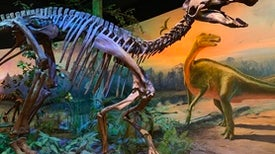 Fossils Show How Shovel-Beaked Dinosaurs Grew