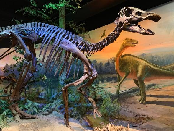 Fossils Show How Shovel-Beaked Dinosaurs Grew