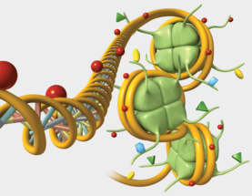 Gene Regulation, Illustrated