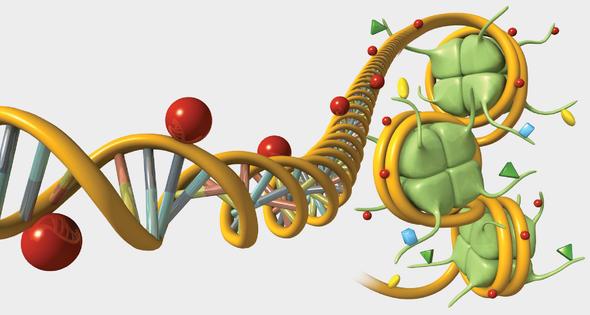 Gene Regulation, Illustrated