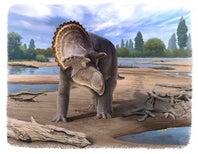 Paleo Profile: The Northern Nasutoceratopsian