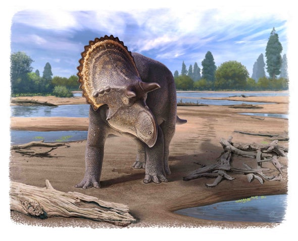 Paleo Profile: The Northern Nasutoceratopsian
