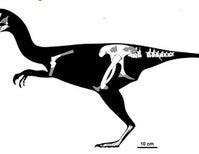 Fossil Bones Reveal New Baby Dinosaur