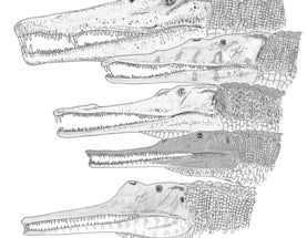 Phytosaurs, (mostly) gharial-snouted reptiles of the Triassic, part I