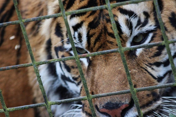 U.S. Finally Closes Tiger Commerce Loopholes