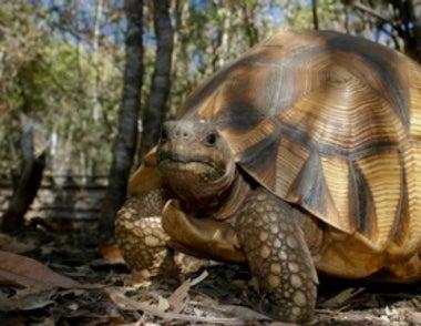 The Turtle Extinction Crisis