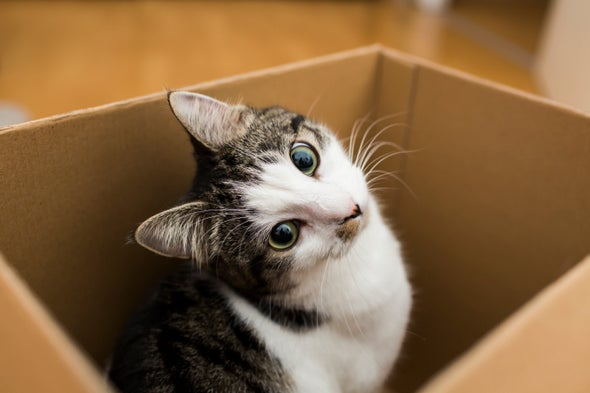 What We Understand about Cats and What They Understand about Us