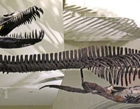Just How Good Is the Plesiosaur Fossil Record?