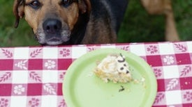 Need Help with Portion Control? Don't Ask a Dog for Help