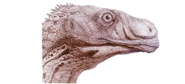 Dinosaur Highlights a Jurassic Mystery