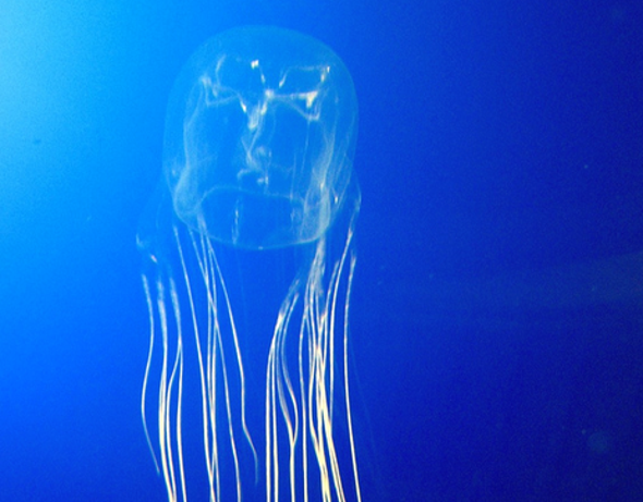 Jellyfish, Sexbots and the Solipsism Problem