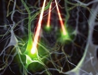 Using Light to Monitor and Activate Specific Brain Cells