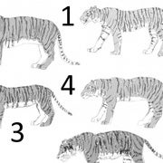 The Tiger Subspecies Revised, 2017