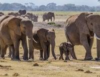 Wildlife on the Move