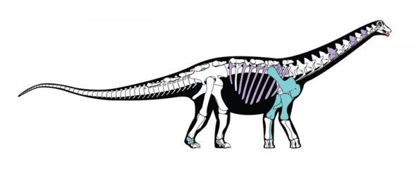 Paleo Profile: The Mansoura Lizard