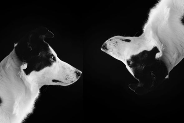 The Hidden Dogs of Dog Cloning