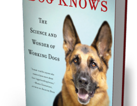 Would Your Dog Make a Good Cadaver Detection Dog?