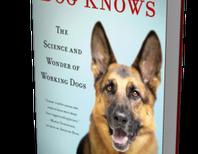 Would Your Dog Make a Good Cadaver Detection Dog?