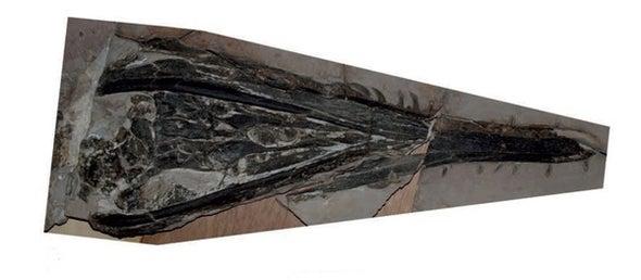 Paleo Profile: Mauricio Fernández's Plesiosaur
