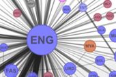 Visualizing the Global Network of Languages