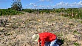Habitat Restoration Isn't Just for Professionals