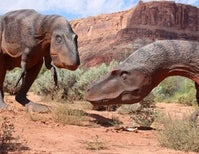 How Dinosaurs Strutted Their Stuff