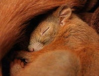 Hibernating Squirrels and the Government Shutdown
