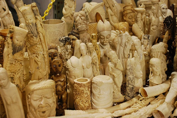 Is China's Ivory Ban a Sign of Hope for Elephants?