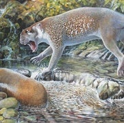 Paleo Profile: Shouten's Marsupial Lion