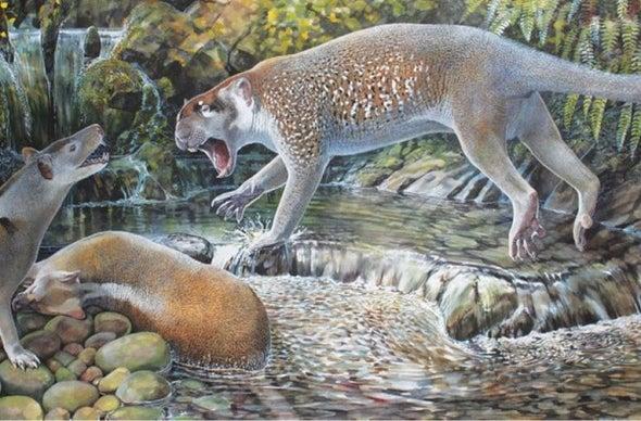 Paleo Profile: Shouten's Marsupial Lion