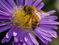 Inside the Wonderful World of Bee Cognition - How it All Began