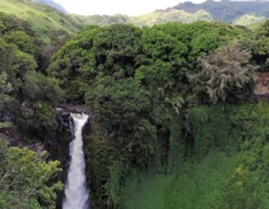 Trump Budget Cuts Could Cause Hundreds of Plant Extinctions in Hawaii