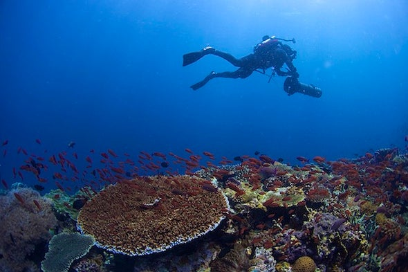 The Richest Reef: Where Have All the Predators Gone?
